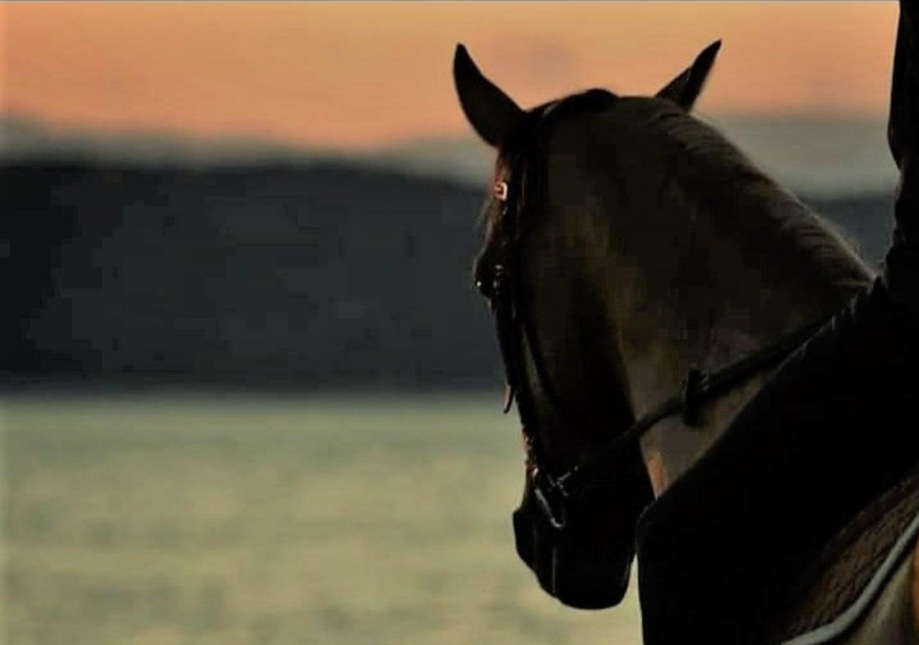 Marathon - Horse Riding and Greek Mythology Storytelling by the Sea, on Schinias bay