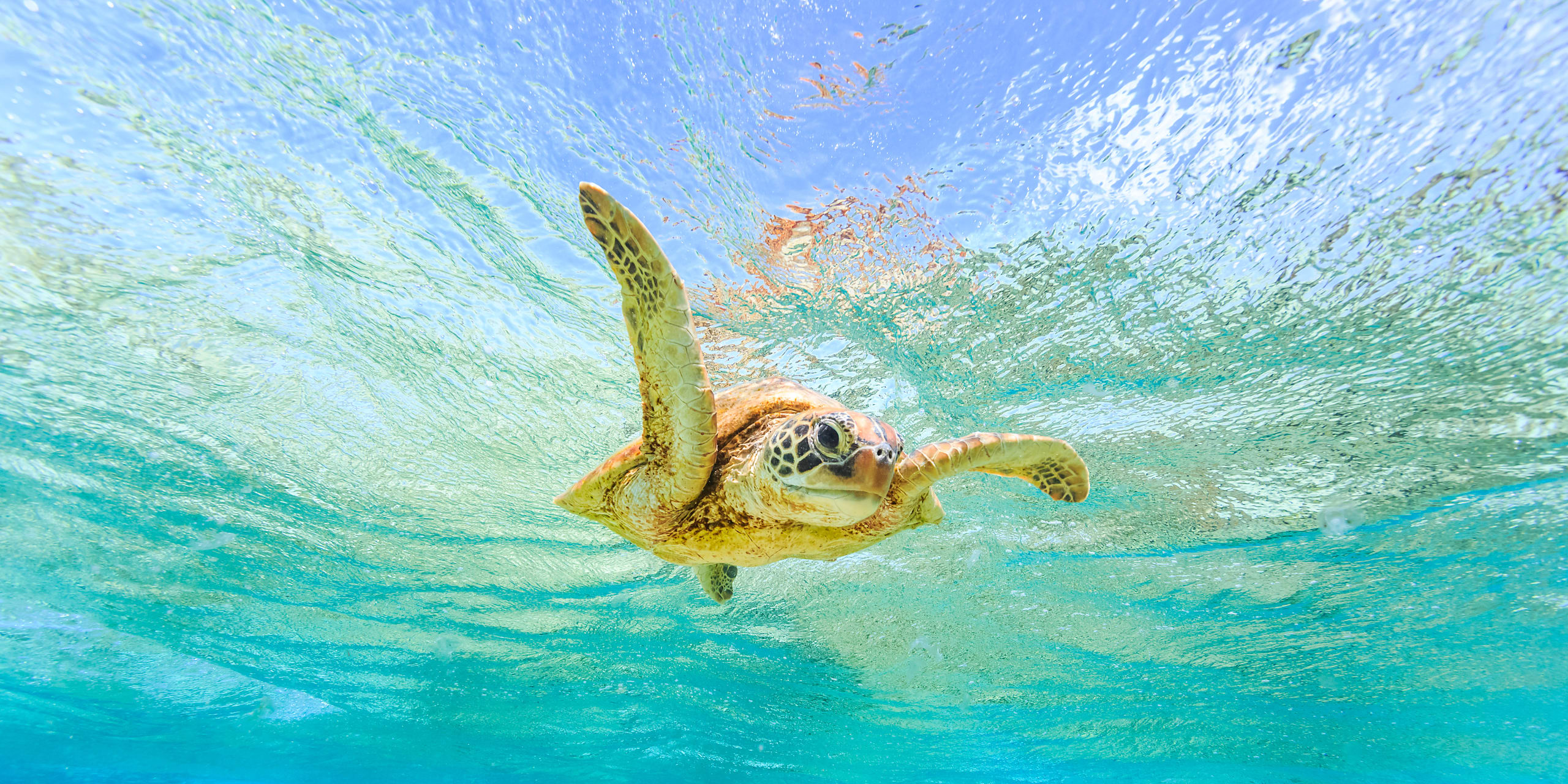 New South Wales - Snorkelling in Australia with Sea Turtles