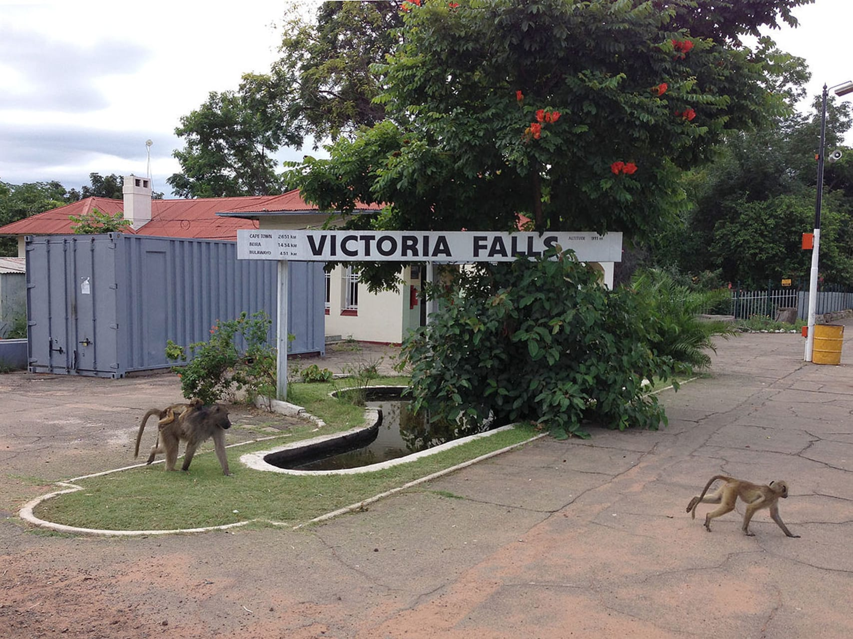 Victoria Falls - Wild animals in a City full of humans!