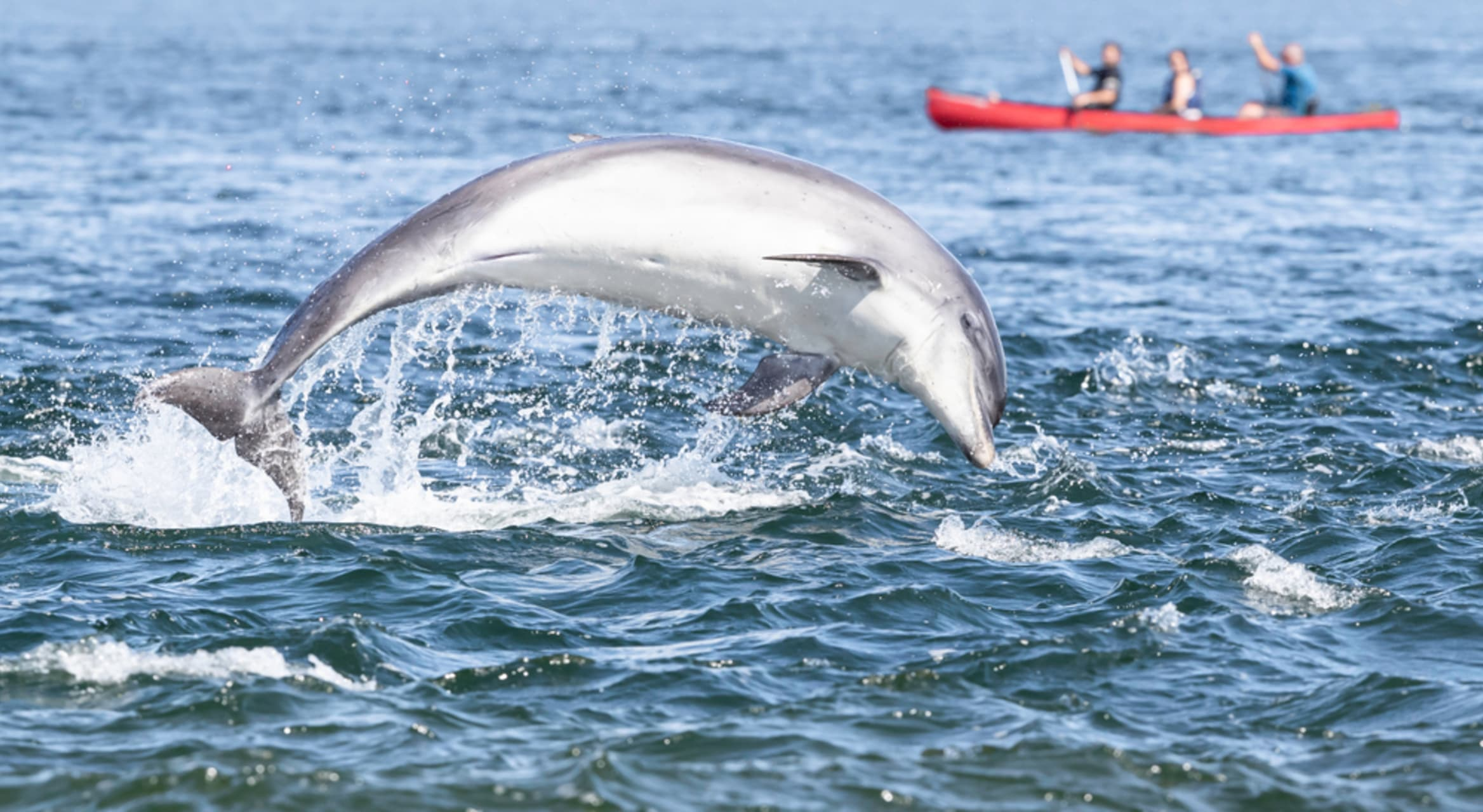 New South Wales - Kayaking with Wild Dolphins in Australia