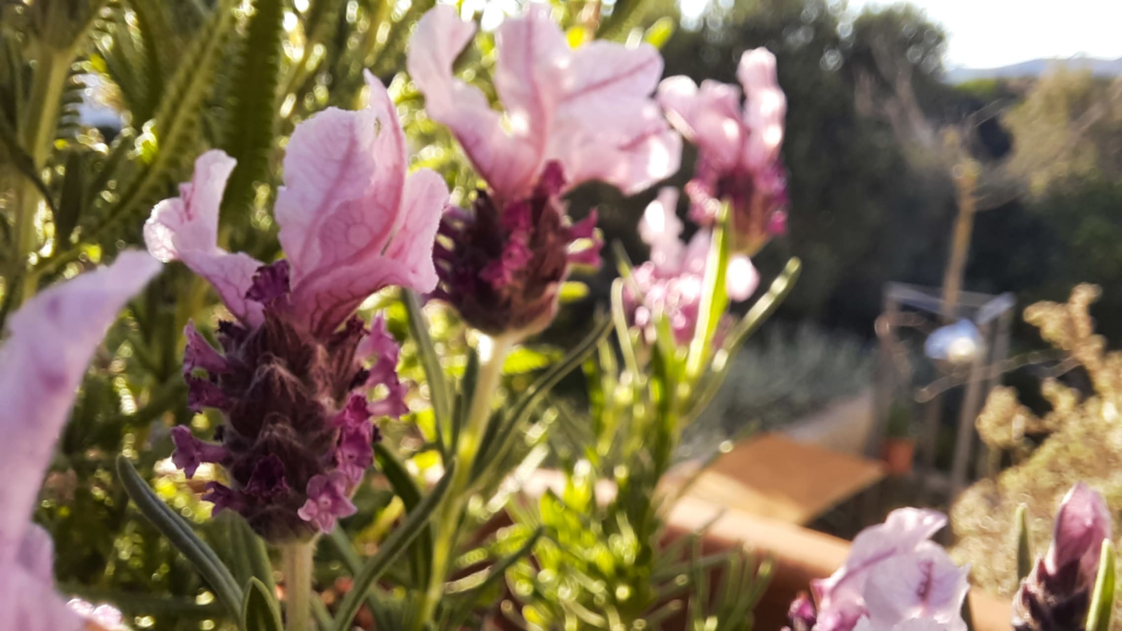 Korcula - Aromatic Herbs, Orchids & Gin Tonic by the Sea