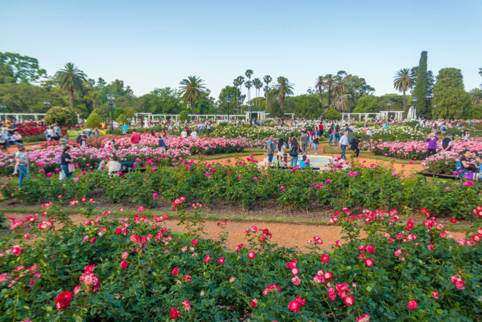 Buenos Aires - Poetry at the Rose Garden: El Rosedal of Buenos Aires