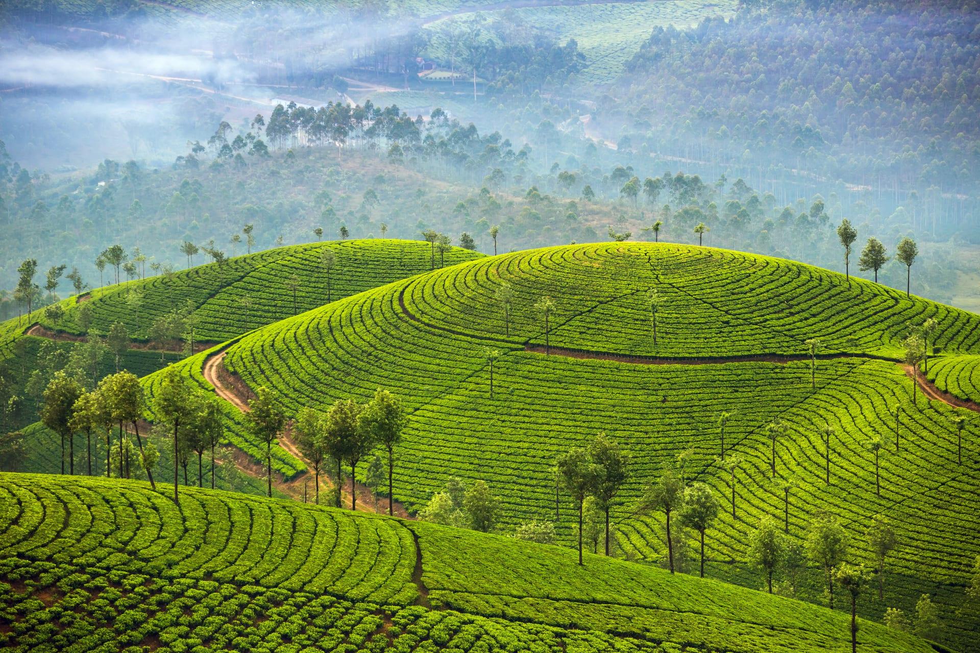Kerala - Munnar - A Road Trip