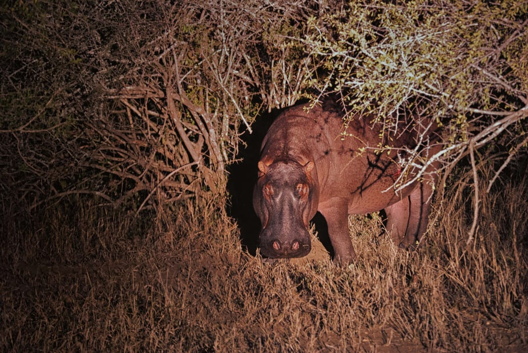 Saint Lucia - Nocturnal Roam for Wildlife