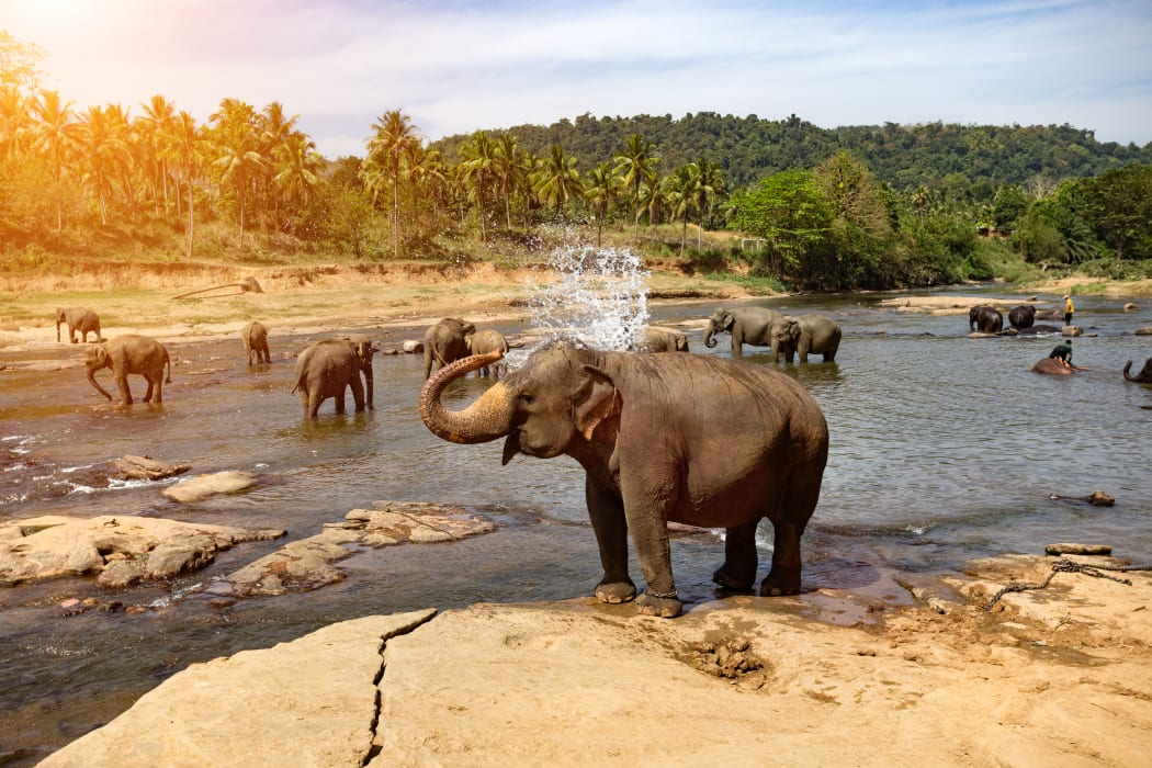 Pinnawala - Let's See the Elephants In Sri Lanka