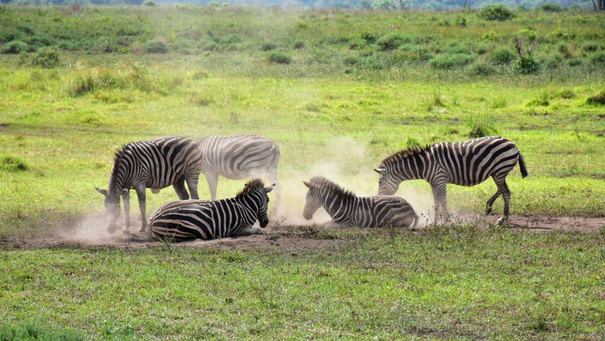 Saint Lucia - Walking Safari in the South African Bush