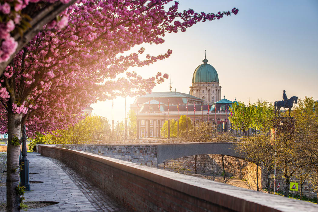 Budapest - Budapest Limited Series  - Cherry Tree Blooming in the Buda Castle Quarter