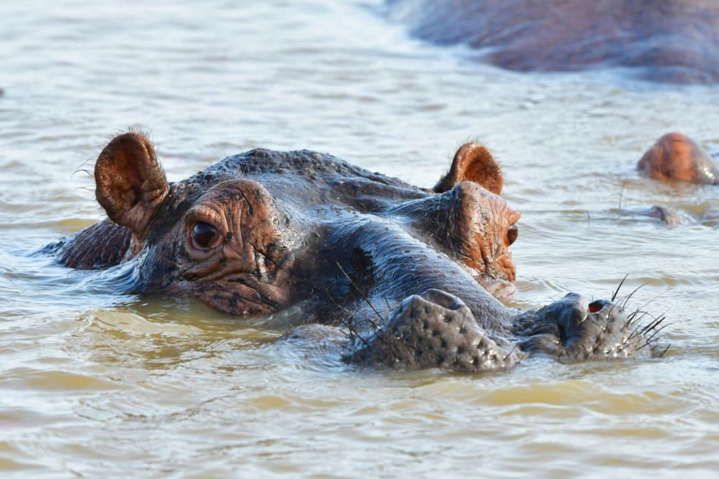 Saint Lucia - Hippo and Croc boat cruise on Lake St Lucia