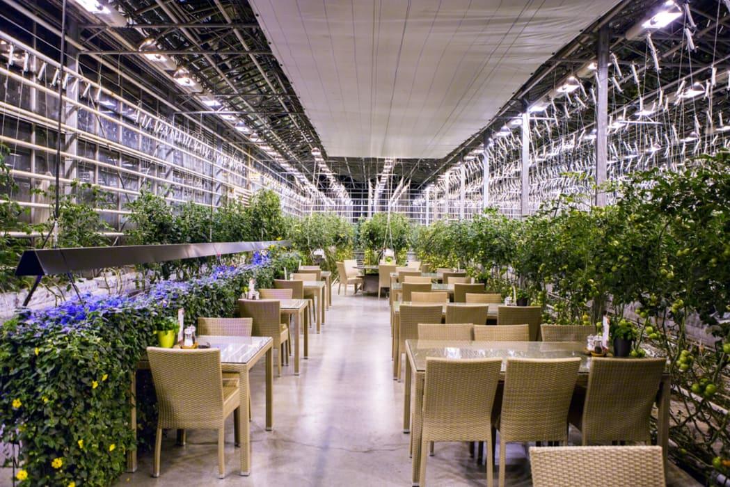 Iceland - Golden Circle Part V: The Joy of Sustainability, Visit  the Internationally Awarded Friðheimar Tomato Farm