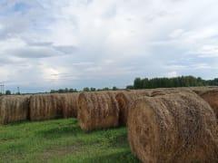 В Тобольском районе идет заготовка сена