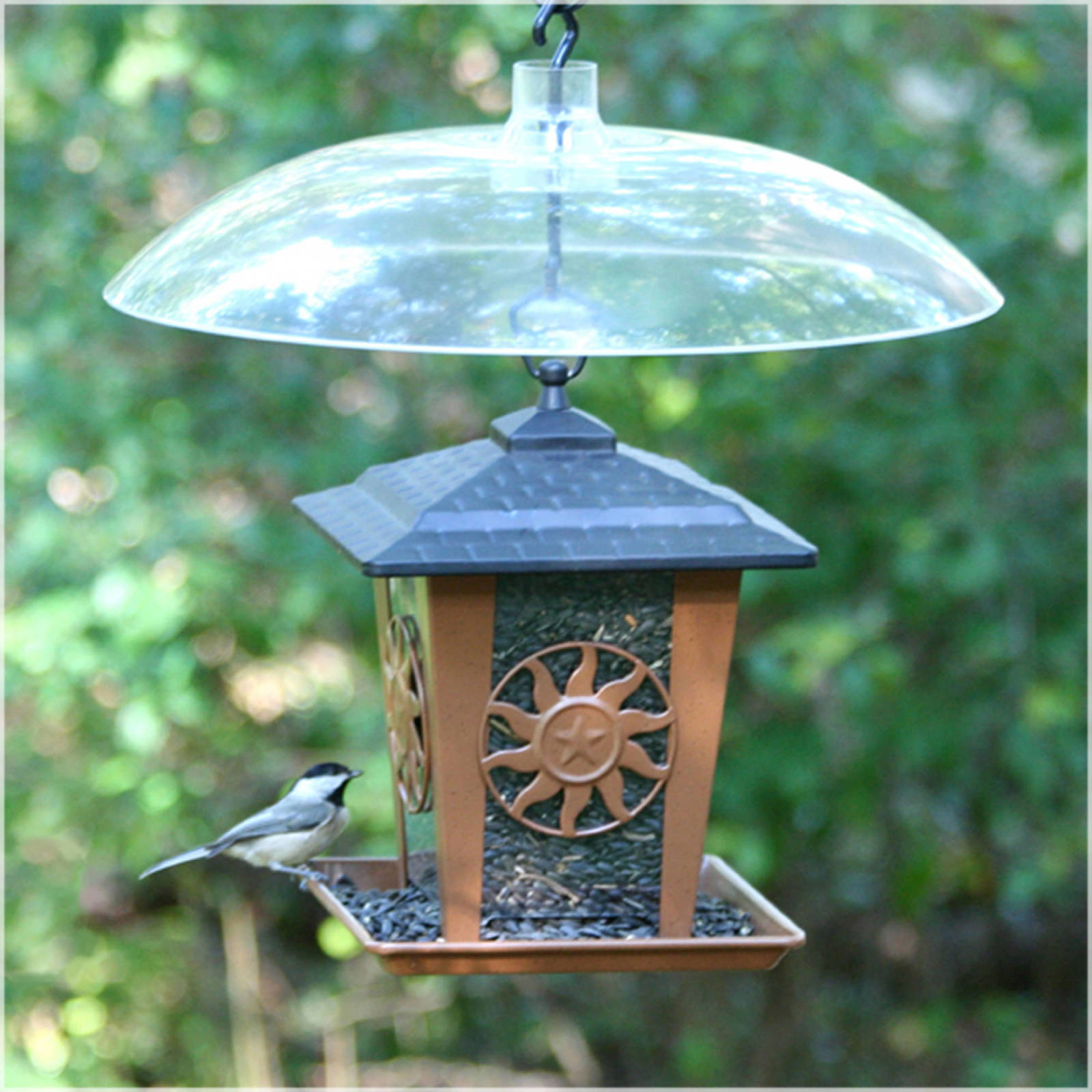 james a has daze cottage feeder think nice you to proof the workshop squirrel t bird stand dsc ring it don ultimate of kind ross building