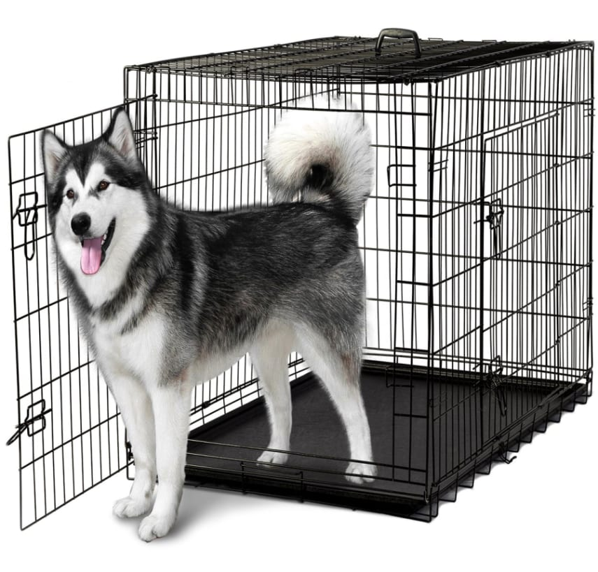 Best Brand Crate For A Large Dog