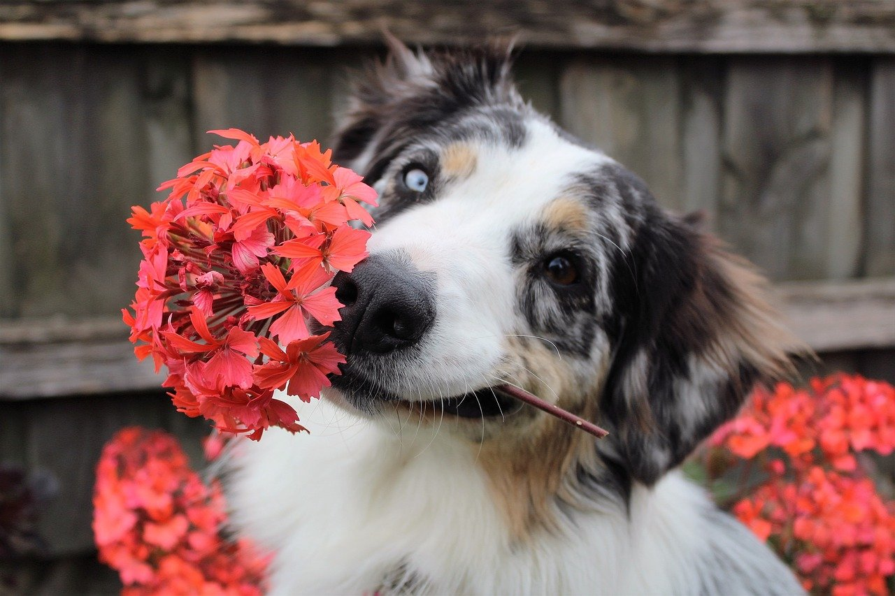 Mother S Day Flowers That Are Toxic To Dogs Teamdogs
