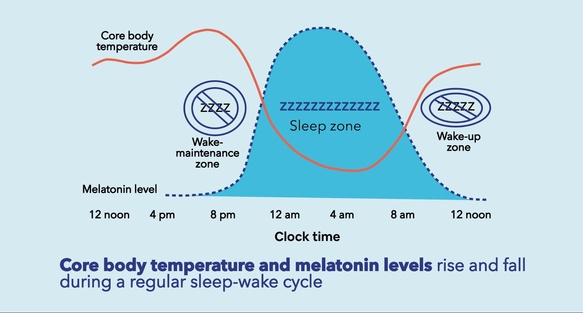Core body temperature and melatonin levels rise and fall during a regular sleep-wake cycle.