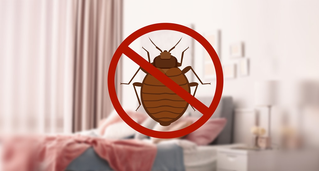 No more pests on your bed