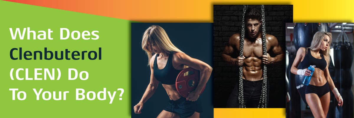 What does Clenbuterol (CLEN) do to your body?