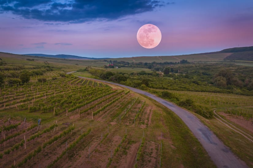 Moon over vineyard illustrating what is biodynamic wine and how it's made