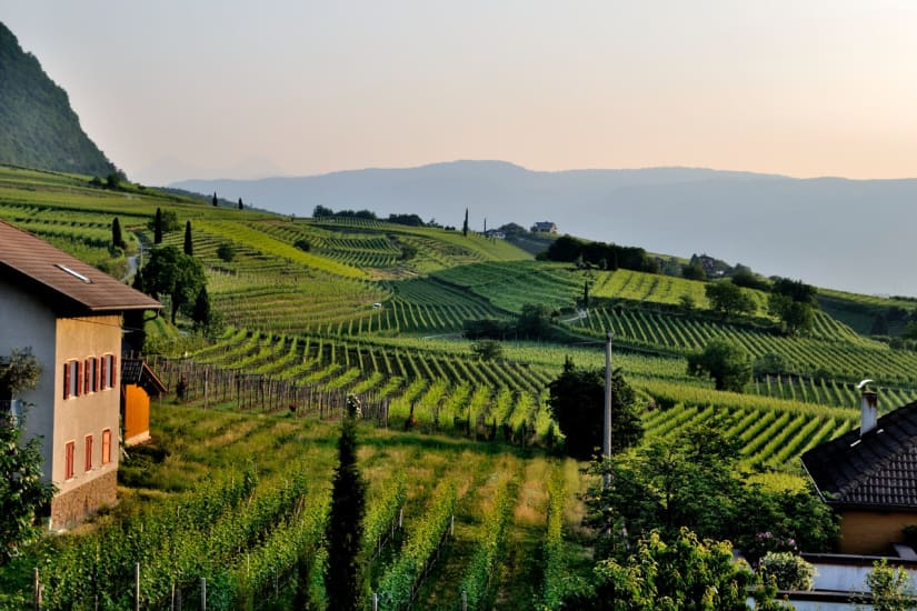 wine by country illustrated by vineyard landscape