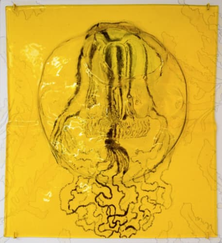 Wouter Venema, Box Jellyfish (Medusa)