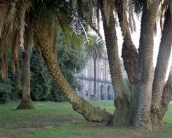 Cuny Janssen, Naples, Italy 2012