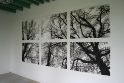 Carlijn Mens, Preserved Places, Vincent van Goghplein 1, Zundert (beuk)
