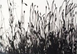 Carlijn Mens, Preserved Places, Roadside, Schoorl & Bergen  (grassen)