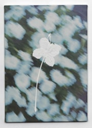 Marijke van Warmerdam, Flower 1 – white peduncle