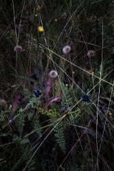 Elspeth Diederix, Grassland