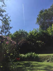 Juliette Blightman, 1st June - Garden, Farnham (with Plane)