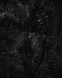 Roosmarijn Pallandt, Timor 09