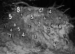 Nico Krijno, Fallen Pine numbered