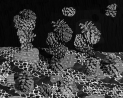 Nico Krijno, Pattern Study with Pine Cones