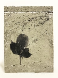 TINKEBELL., Flower collage in a box of concrete with aceton print