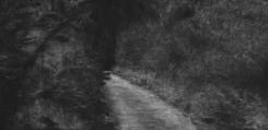 Renie Spoelstra, Longing (path)#4