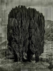 Albert Watson, Trees, Isle of Skye, Scotland