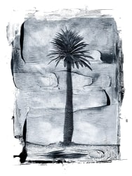 Albert Watson, Palm Tree, St, John, Virgin Islands