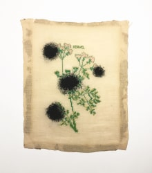 Lawrence James Bailey, Still Life with Black Holes and Chervil