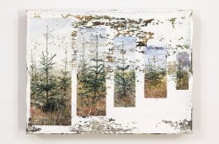 Jeppe Lauge, Trees in a row
