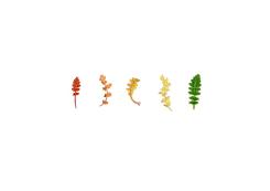 Anne Geene, Colour Analysis Achillea Millefolium (individual plant)