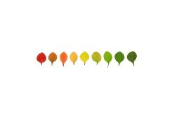 Anne Geene, Colour Analysis Berberis Thunbergerii (individual plant)