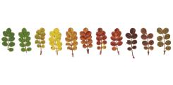 Anne Geene, Colour Analysis Rosa Pimpinellifolia (individual plant)