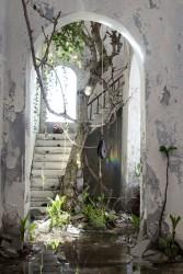 Choki Lindberg, The Tree