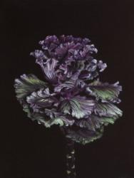 Damien Cadio, Les algues Solaris