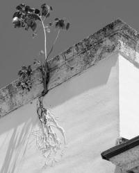 Anastasia Samoylova, Painted Roots