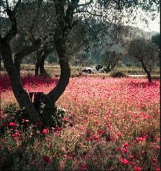 Jacques Henri Lartigue, Florette in the Morgan, Provence, France, May