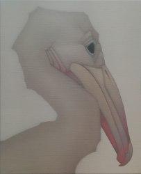 Peter Vos, Pelican Chick