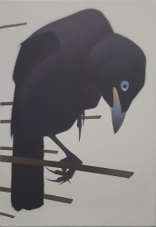 Peter Vos, Jackdaw Youngling