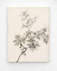 Joris Vanpoucke, Plant Study