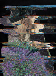 Nico Krijno, Lockdown Collage #6