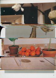 Nico Krijno, Lockdown Collage #34